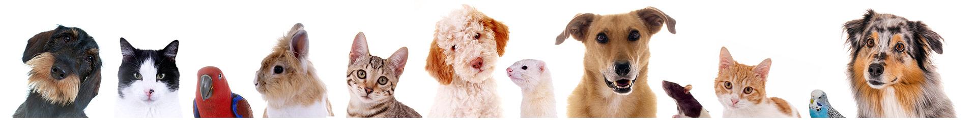 Hundefriseur & Tierbetreuug - Nadja Müller